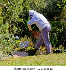 backyard beekeeper doing hive maintenance in a beekeeper's protective suit