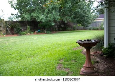 Backyard with a Birdbath