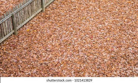 A backyard completely covered with an overwhelming amount of fall leaves with a fence angled in the top left corner.