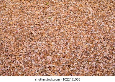 A backyard completely covered with an overwhelming amount of fall leaves.  Photo taken from above.