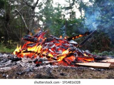 Brennholz aus Hinterhof schön