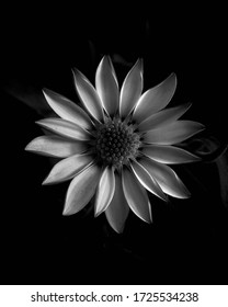 Backyard Flowers In Black And White