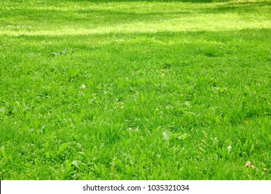 Backyard Or Front Yard Fresh Green Lawn In Perspective View. Park Lawn With Moved Grass For Resting In Springtime Or Summertime. Lush Meadow Grass Background Or Texture