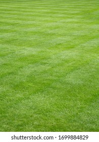 Backyard garden with beautiful fresh cut green grass, depicting lawn care and landscaping