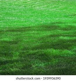 Garten-Garten-Park schattigen, frischen, grünen Hintergrund oder Textur. Rasen aus Turf oder Sod. Fokus selektiv.
