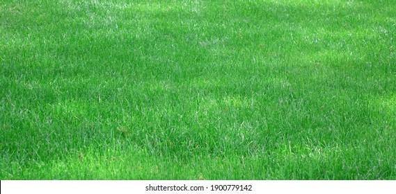 Backyard Garden Shady Fresh Lawn Green Background Or Texture.