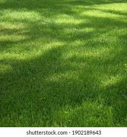 Backyard Garden Shady Fresh Lawn Green Background Or Texture. Focus Selective.