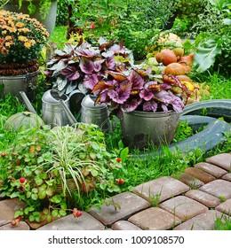 Backyard Kitchen Garden.  Harvest Vegetables On The Grass. Gardening Concept.