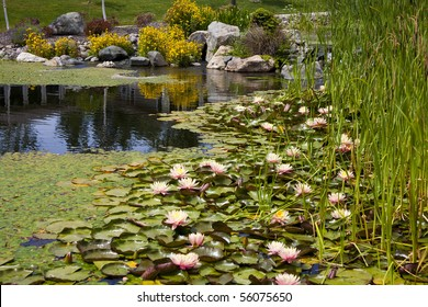 Backyard Pond Water Feature with Cattails, Lilypads and Flowers