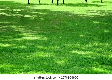 Backyard Shady Fresh Lawn Background Texture. Rolled Lawn. Country Garden Or Park Green Bright Grass. Background With Trees Shadow. Picnic Family Place On Grass Or Resting Area. Focus Selective.
