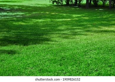 Hinterhof Schattige, frische, braune Hintergrundtextur. Picknickplatz. Landgarten oder Park Grüner Hellgras. Hintergrund mit Baumschatten. Picnic-Familie legen auf Gras oder Ruhplatz. Fokus selektiv.