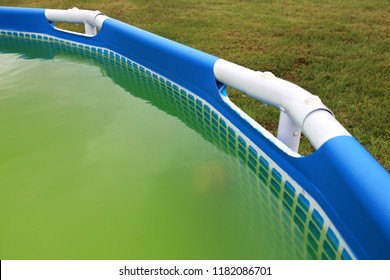 A backyard swimming pool has turned green with algea and dirt and is in need of chlorine treatment.