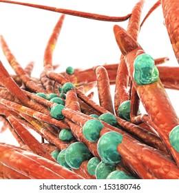 Bacteria Colony