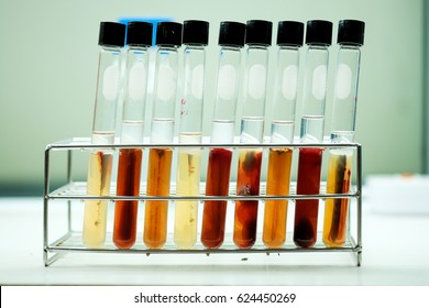 Bacteria produce Astaxanthin in test tube covered with paraffin.