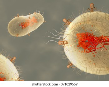 Bacteriophage viruses infecting bacterial cell