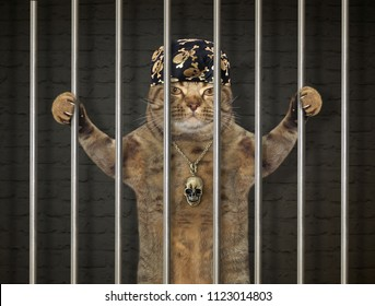 The bad cat in a bandana is behind bars in the prison.
