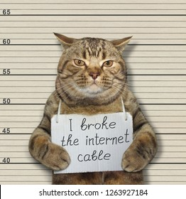The bad cat broke the internet cable. He arrested by the police for this crime and sent to jail.
