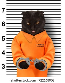 Bad cat with handcuffs on white background. Cat is wearing a  orange jump suit. Violation of the law.