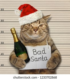 The bad cat in a Santa Claus hat with a bottle of sparkling wine was arrested.