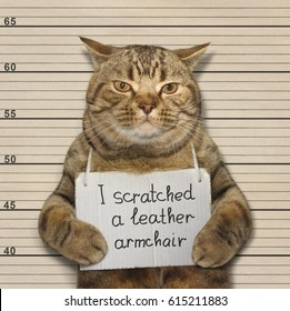THe bad cat scratched a leather armchair. He went to prison for  it.
