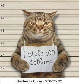 The bad cat stole 100 dollars. He was arrested for it.