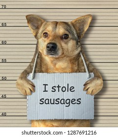 The bad dog stole some sausages. He was arrested for it.  Lineup background.