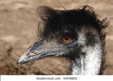 3 720 Bad Hair Bad Hair Day Images Royalty Free Stock Photos On