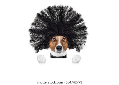 bad hair day dog ready to look beautiful at the wellness spa salon, isolated on white background, behind white banner or placard