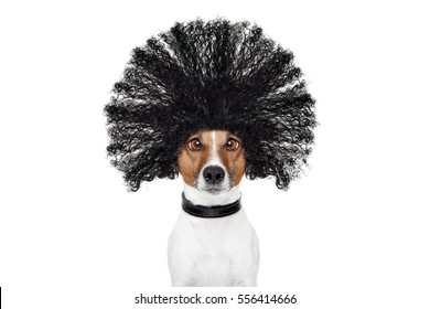 bad hair day dog ready to look beautiful at the wellness spa salon, isolated on white background, hairs gone wild