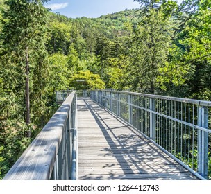 Bad Harzburg, Lower-Saxony, Germany, July 27. 2018: View over a corridor of the treetop path between the crowns of mighty deciduous trees and conifers.