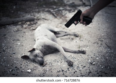 Bad human aim to dog and need to kill with hand gun. Animal kill and murder concept, Criminal nad outlaw concept, Dark tone and vignette