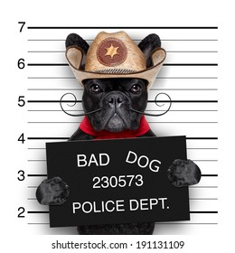 bad mexican dog in a police mugshot