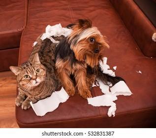 Bad pet