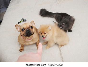 Bad pets -indoor shot