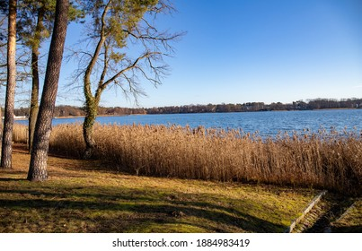 Bad Saarow, Brandenburg, Deutschland - Dezember, 30. 2020 Lakeshore with trees to the side. Autumn landscape sunny day. Reeds in the water.
