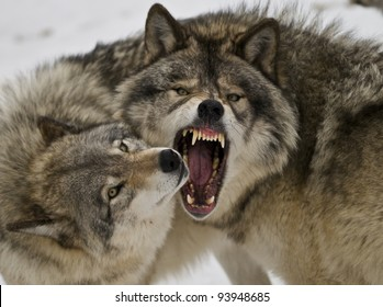 Bad Wolf Day
