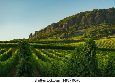Badacsony hill in Hungary, Balaton at the year of 2019