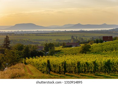 The Badacsony mountain with Lake Balaton and a vineyard in sunset colors in Hungary