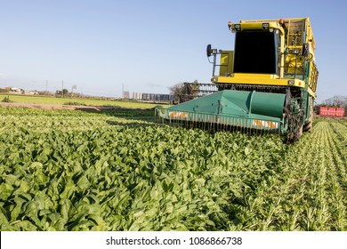 Badajoz, Spain - April 28th, 2018: Modern self-propelled spinach harvester at work. Badajoz, Spain