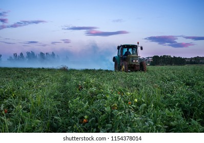 Badajoz, Spain - July 7th, 2017: Tractor dusts with sulfur powder tomato plants at sunset. Extremadura, Spain