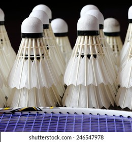 Badminton Shuttlecocks with Racket in Foreground