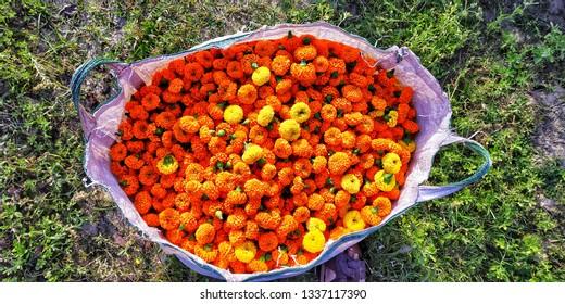 a bag full of marigolds