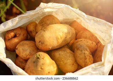 bag with potatoes