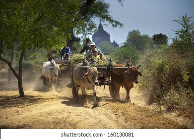 BAGAN, MYANMAR - FEB. 15: unidentified farmers riding on their Ox cart in Bagan, Myanmar on February 15, 2011. Myanmar ranks 16th out of 149 Nations in Agriculture growth.