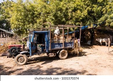 BAGAN, MYANMAR, JANUARY 2018: Harvesting time in Bagan, Myanmar