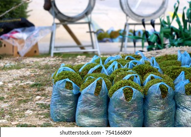 Bags with decorative moss for sale on a Christmas tree lot. Selective focus.