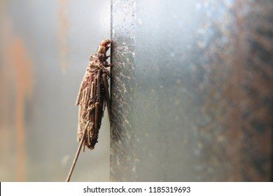 Bagworm Moth Larva Images, Stock Photos & Vectors | Shutterstock