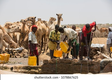 Baidoa / Somalia - March 2017 - The mens are take water for animals during deadly drought in the country.