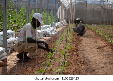 Baidoa / Somalia - March 2017 - Workers trying to farm while drought in Somalia