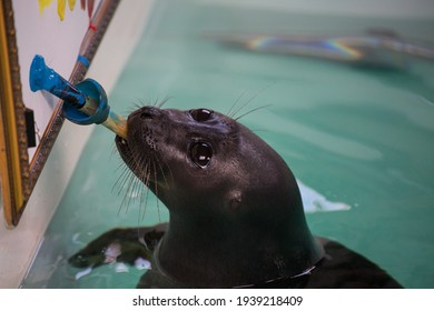 Baikal seal or Nerpa endemic of lake Baikal paints a picture with paint